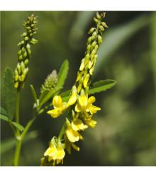 Komonice lékařská - Melilotus officinalis - semena - 30 ks
