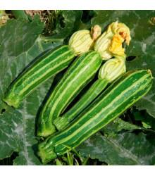 BIO cuketa Green Tiger F1 - Cucurbita pepo - bio semena cukety - 5 ks