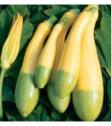 Cuketa Zephyr F1 - Cucurbita pepo - semena cukety - 6 ks