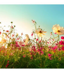 Letničky Romantická zahrada - směs letniček - semena - 0,9 g