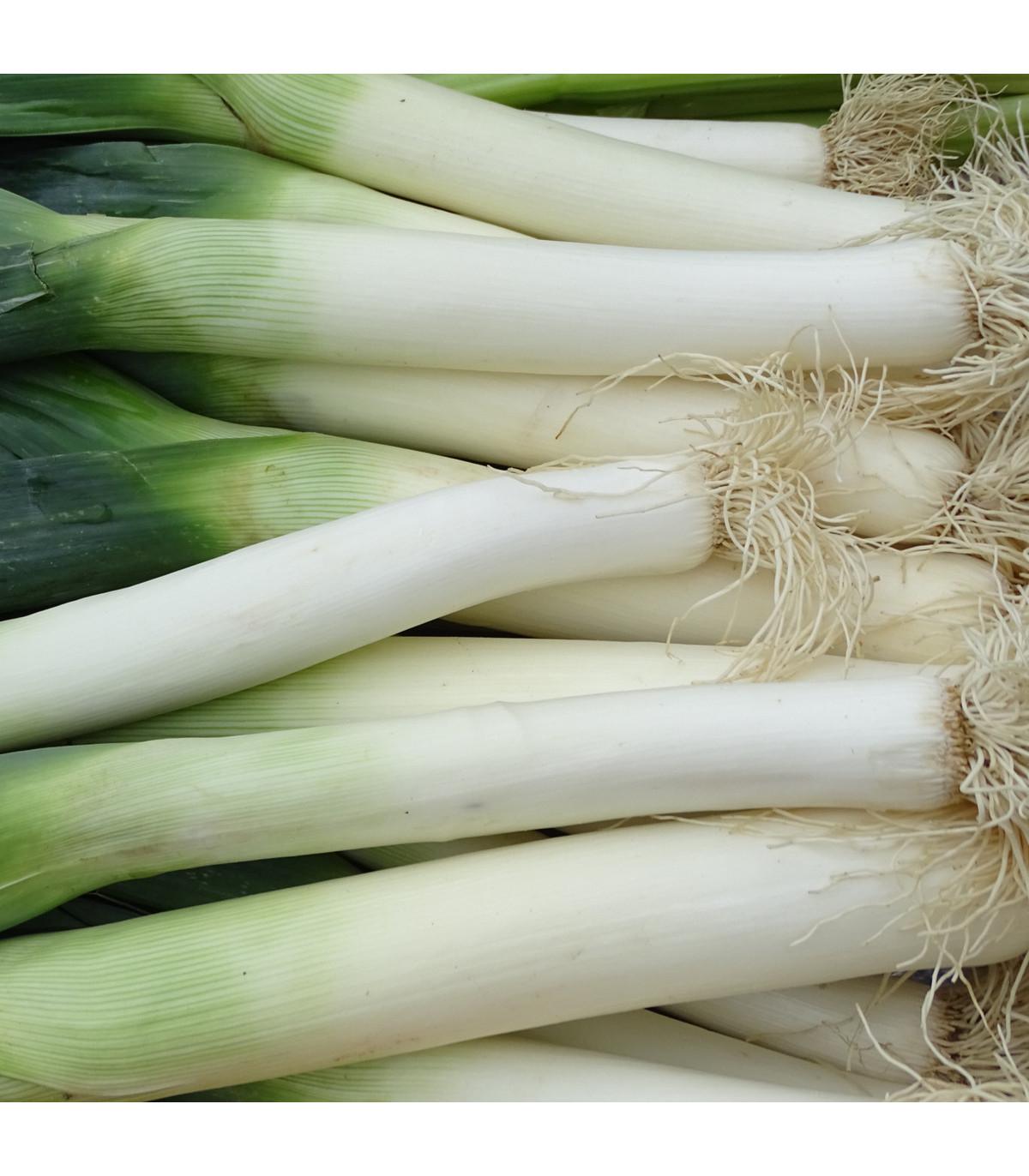 Pór zimní Carentan - Allium porrum - semena - 1,5 g