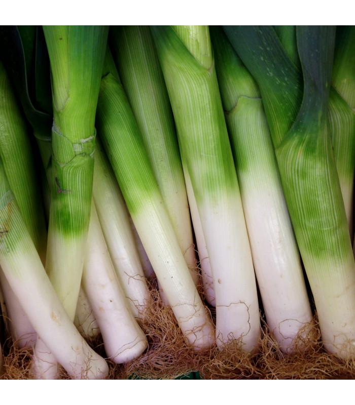 Pór zimní D´Elbeuf - Allium porrum - semena - 200 ks