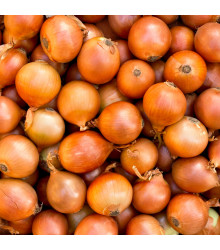 BIO Cibule jarní žlutá - Allium cepa - Bio semena - 500 ks