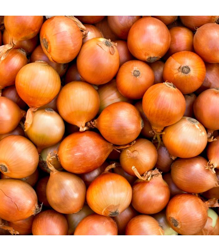 BIO Cibule jarní žlutá - Allium cepa - Bio semena - 2 g