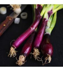 Cibule jarní červená Redmate - Allium cepa - semena - 100 ks