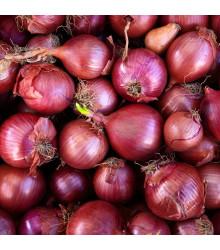 Cibule Červený baron / Red Baron - Allium cepa L. - semena - 0,5 g