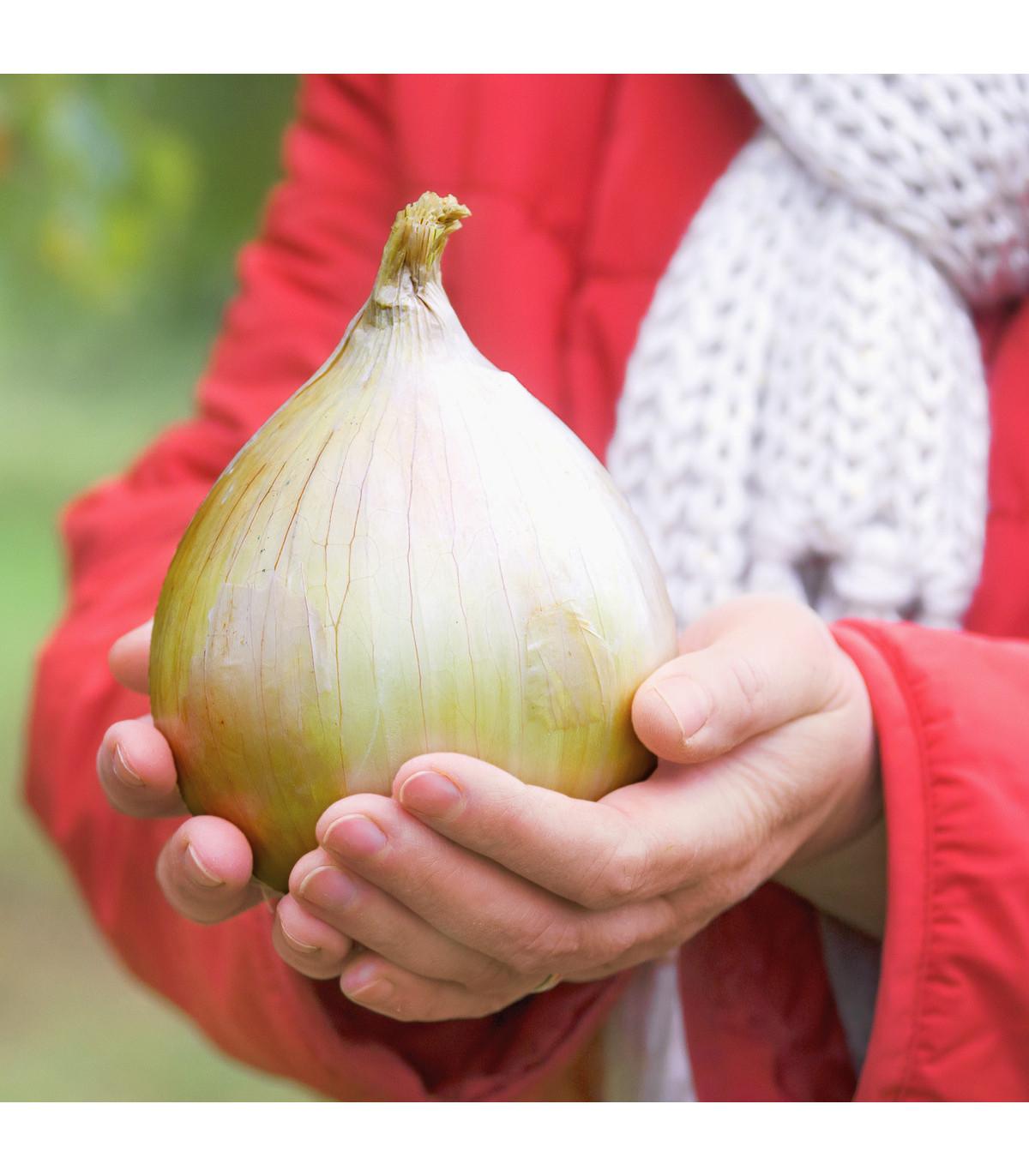 Cibule obrovská Kelsae - největší cibule světa - Allium cepa - semena - 100 ks