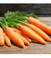 BIO mrkev Rothild velmi raná - Daucus carota - bio semena - 0,5 g