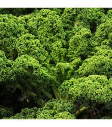 Kadeřávek Lerchenzungen - Brassica oleracea L. - semena - 150 ks
