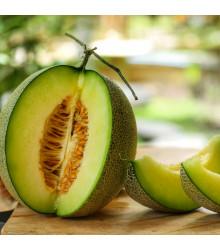 Meloun galia Exelor F1 - Cucumis melo - semena - 5 ks
