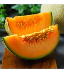 Cukrový meloun Maltese F1 - Cucumus melo - semena - 8 Ks