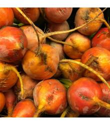 Řepa salátová žlutá Boldor F1 - Beta vulgaris - semena - 50 ks