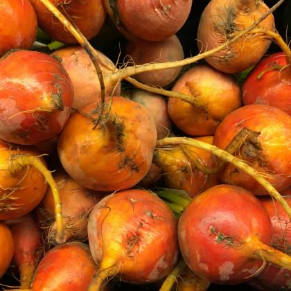 Řepa salátová žlutá - Burpees Golden - semena - 1 g