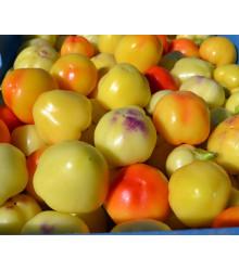 Rajčatová paprika Nagykuti - Capsicum annuum - semena - 7 ks