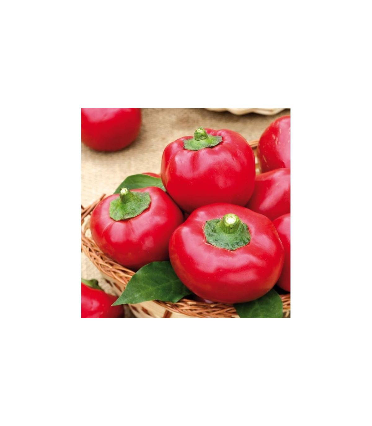 Rajčatová paprika Topgirl - Capsicum annuum - semena - 7 ks