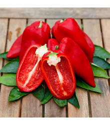 Paprika Snacking Red F1 - Capsicum annuum - semena - 5 ks