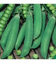 Hrách dřeňový Winner - Pisum sativum - semena - 15 g