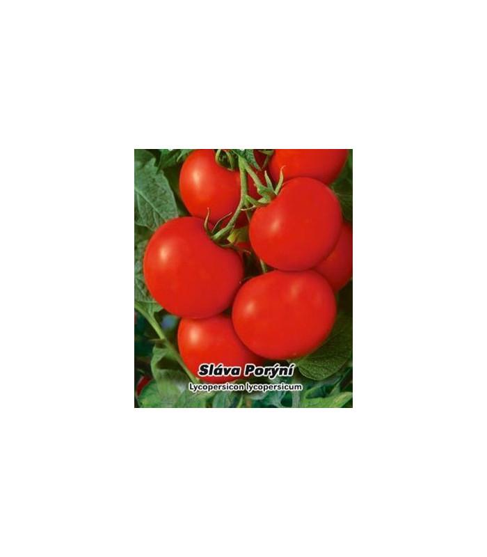Rajče tyčkové Sláva Porýní - semena rajčat - 50 ks