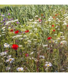 Luční květy na obohacení porostu - semena - 50 g