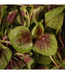 Laskavec trojbarevný červený - Amaranthus tricolor - semena - 270 ks