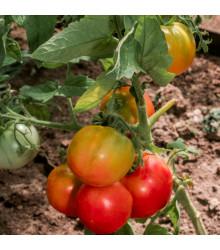 BIO rajče Taste F1 - Lycopersicon esculentum - bio semena - 10 ks