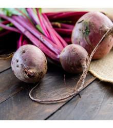 BIO Řepa salátová Chioggia - Beta vulgaris - bio semena - 40 ks
