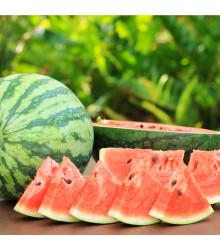 BIO meloun vodní Sugar baby - Citrullus lanatus - bio semena melounu - 6 ks