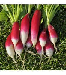 BIO Ředkev Francouzská snídaně - Raphanus sativus - bio semena - 80 ks