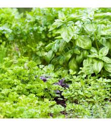 More about Aromatické byliny a koření - směs - semena - 0,5 g