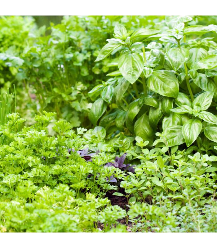 Aromatické byliny a koření - směs - semena - 0,5 g