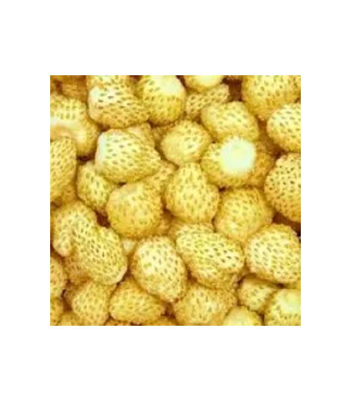 Jahodník měsíční Yellow Wonder - Fragaria vesca - semena -