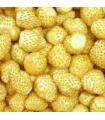 Jahodník měsíční Yellow Wonder - Fragaria vesca - semena - 0,1 g