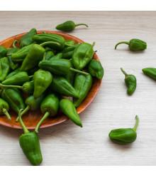 Chilli Pimientos De Padron – Capsicum annuum – semena chilli – 7 ks