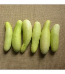 Salátová okurka Martini F1 - Cucumis sativus - semena - 10 ks