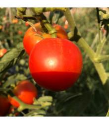 Rajče Harzfeuer F1 - Lycopersicon esculentum - semena - 6 ks