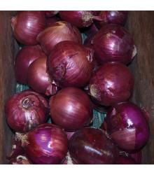 Cibule Magnate F1 - Allium cepa - semena - 150 ks