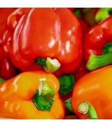 Paprika Babybell červená - Capsicum annuum - semena - 10 ks