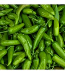 Chilli Velký Jim – Capsicum annuum – semena chilli – 7 ks