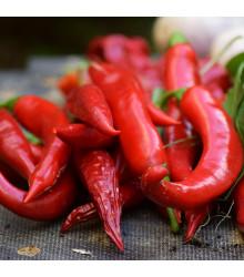 "Chilli Kajenský pepř ""extra tenký"" – Capsicum annuum – semena chilli – 7 ks"