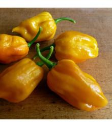 Chilli Habanero mustard – Capsicum chinense – semena chilli – 6 ks