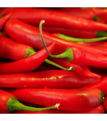 More about Chilli Aji crystal – Capsicum baccatum – semena chilli – 7 ks