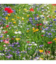 Letničky Divoké polní květy - směs letniček - semena - 0,9 g
