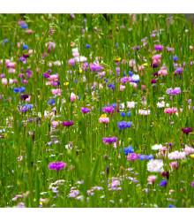 Japonská zahrada - semena - směs letniček - 0,9 g