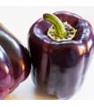 Paprika Zulu - Capsicum annuum - semena - 10 ks