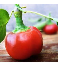 Chilli Large Red Cherry Hot – Capsicum annuum – semena chilli – 7 ks