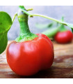 Chilli Large Red Cherry Hot - Capsicum annuum - semena - 7 ks