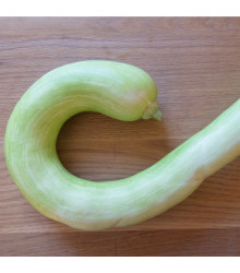 Tykev velkoplodá Tromba d Albenga - Cucurbita moschata - semena - 6 ks
