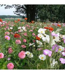 Lednická radost - letničková směs - semena - 20 g