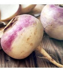 More about Vodnice kulatá červenobílá - Brassica rapa L. - semena - 350 ks