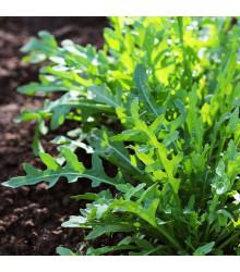 Rukola divoká Sprint - Eruca Selvatica- semena - 0,2 g
